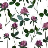 Seamless pattern clover Stock Photo