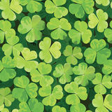 Seamless pattern with clover leaves Royalty Free Stock Images