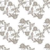 Seamless pattern with clover. Monochrome hand-drawn  backg. Monochrome  background with hand drawn clovers Stock Photo