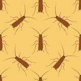 Seamless pattern with cockroach. blattella germanica   hand-drawn cockroach. Vector Royalty Free Stock Photography