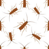 Seamless pattern with cockroach. blattella germanica   hand-drawn cockroach. Vector Royalty Free Stock Photo