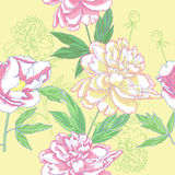 Seamless pattern  with color peonies Royalty Free Stock Image