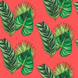 Seamless pattern color tropical leaves on coral background royalty free stock image