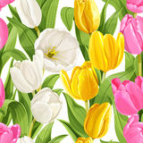 Seamless pattern of color tulips Royalty Free Stock Images