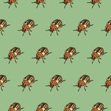 Seamless pattern with colorado beetle Royalty Free Stock Photos