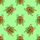 Seamless pattern with colorado potato beetle. Leptinotarsa decemlineata.   colorado beetle.  hand-drawn colorado beetle.  Stock Photos