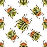 Seamless pattern with colorado potato beetle. Leptinotarsa decemlineata.  colorado beetle. Vector Royalty Free Stock Images