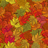 Seamless pattern with colored autumn leaves Royalty Free Stock Photos