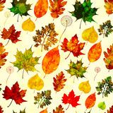 Seamless pattern with colored autumn leaves. Vector, EPS10. Royalty Free Stock Images