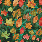 Seamless pattern with colored autumn leaves. Vector, EPS10. Royalty Free Stock Image