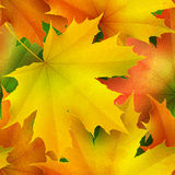 Seamless pattern of colored autumn maple leaves Stock Photos