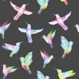 Seamless pattern of colored colibri Stock Photo