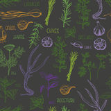 Seamless pattern with colored herbs and spices on a dark background Royalty Free Stock Image