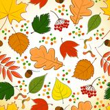 Seamless pattern with colorful autumn leaves Royalty Free Stock Images