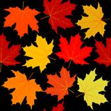 Seamless pattern with colorful autumn leaves. On black background Stock Photography