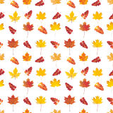 Seamless pattern with colorful autumn leaves Stock Images