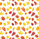 Seamless pattern with colorful autumn leaves. Isolated on white background Royalty Free Stock Photography