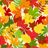 Seamless pattern with colorful autumn leaves. Stock Photography
