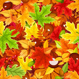 Seamless pattern with colorful autumn leaves. Vector illustration. Stock Image