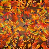 Seamless pattern with colorful autumn leaves on wooden board . Vector illustration stock images
