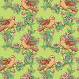 Seamless pattern with colorful birds and blooming summer flowers Stock Photography