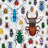 Seamless pattern with colorful bugs. Bright vector drawing of small beetles. Insect on the background with gray leaves. Cartoon bug wallpaper Stock Photography