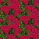 Seamless pattern with colorful bush roses Royalty Free Stock Photos