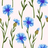 Seamless pattern with colorful cornflowers royalty free illustration