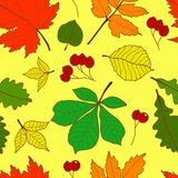 Seamless pattern with colorful fall leaves Stock Images