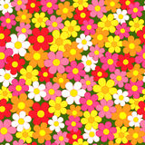 Seamless, pattern  of colorful flowes Stock Image