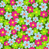 Seamless, pattern  of colorful flowes Royalty Free Stock Image