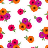 Seamless pattern with colorful gerbera flowers. Vector illustration. Stock Photography