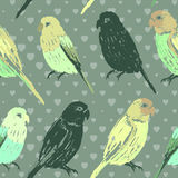 Seamless pattern with colorful hand drawn parrots Royalty Free Stock Photography