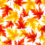 Seamless pattern with colorful leaf fall Stock Images