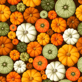 Seamless pattern with colorful pumpkins. Vector illustration. Stock Images