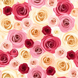 Seamless pattern with colorful roses. Vector illustration. Stock Photography
