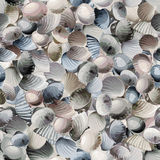 Seamless pattern with colorful sea shells. Royalty Free Stock Images