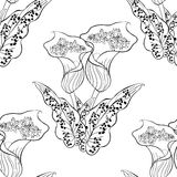 Seamless pattern coloring calla Picasso of flower. Vector illust Stock Photography