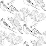 Seamless pattern coloring Jaco, Lovebird, wavy parrot kakadu. Ve Royalty Free Stock Photos