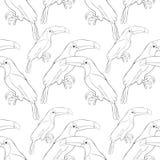 Seamless pattern  coloring  Toucan a  exotic bird Vector  Royalty Free Stock Photos