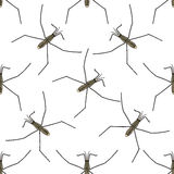 Seamless pattern with Common water strider. Gerridae. GERRIS LACUSTRIS. hand-drawn water strider . Vector Royalty Free Stock Image