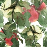 Seamless pattern composed of watercolor alpples. With leaves, hand drawn Royalty Free Stock Image