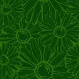 Seamless pattern field chamomiles in green tones. Seamless pattern contour field chamomiles in green tones Stock Photo