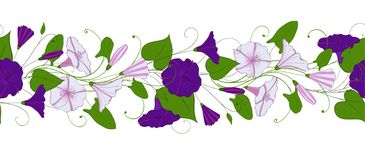 Seamless pattern of convolvulus. Garland with bindweed flowers. Morning-glory ornament. Floral endless border royalty free illustration