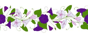 Seamless pattern of convolvulus. Garland with bindweed flowers. Morning-glory ornament. Vector floral endless border Royalty Free Stock Photo