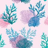 Seamless pattern with coral reef. Underwater wallpaper. Vector seamless pattern with coral reef on a pink background Stock Photography