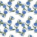 Seamless pattern with cornflower flowers watercolor floral patte. Rn. Cornflower tile for wallpaper, card or fabric. Watercolor wildflower Royalty Free Stock Photos