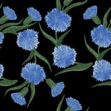 Seamless pattern with cornflower flowers watercolor floral patte. Rn. Cornflower tile for wallpaper, card or fabric. Watercolor wildflower Royalty Free Stock Image