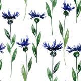 Seamless pattern with cornflowers Stock Photo