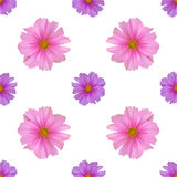 Seamless pattern with cosmos flower. On white background Royalty Free Stock Photography